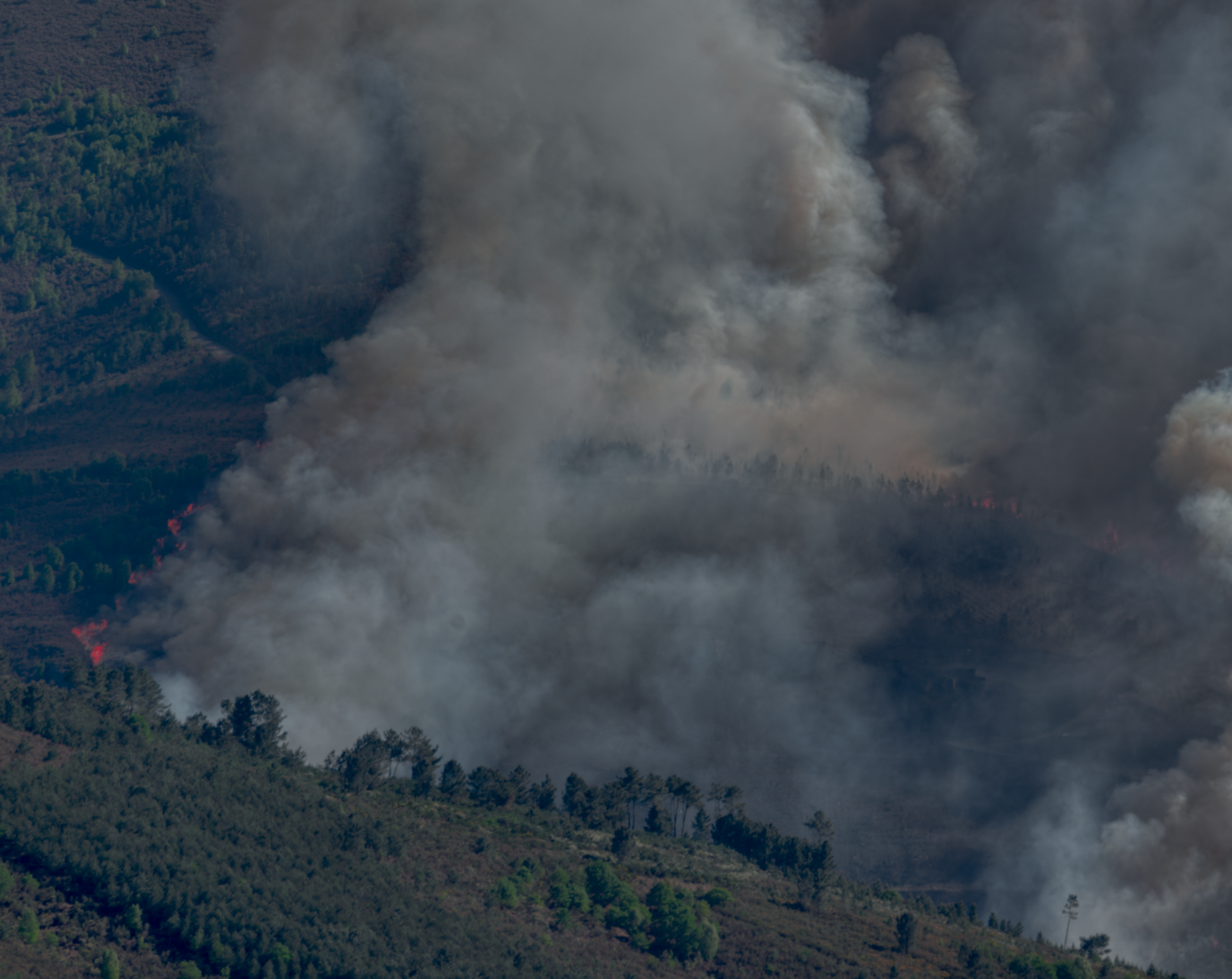 AIIR's visual anomaly detection solution can detect the start of a wildfire from a simple video image in real-time in order to survey areas unreachable by humans.