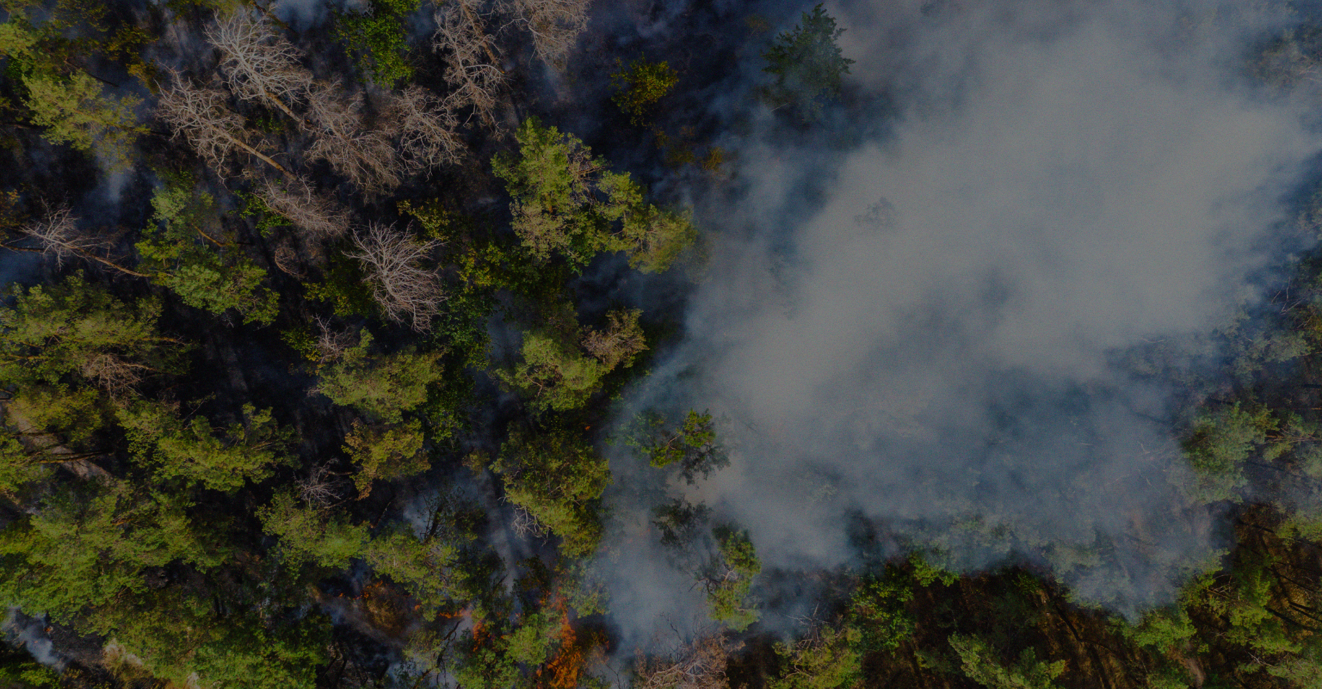 A wildfire sparked in a forest can be detected by AIIR visual anomaly detection.